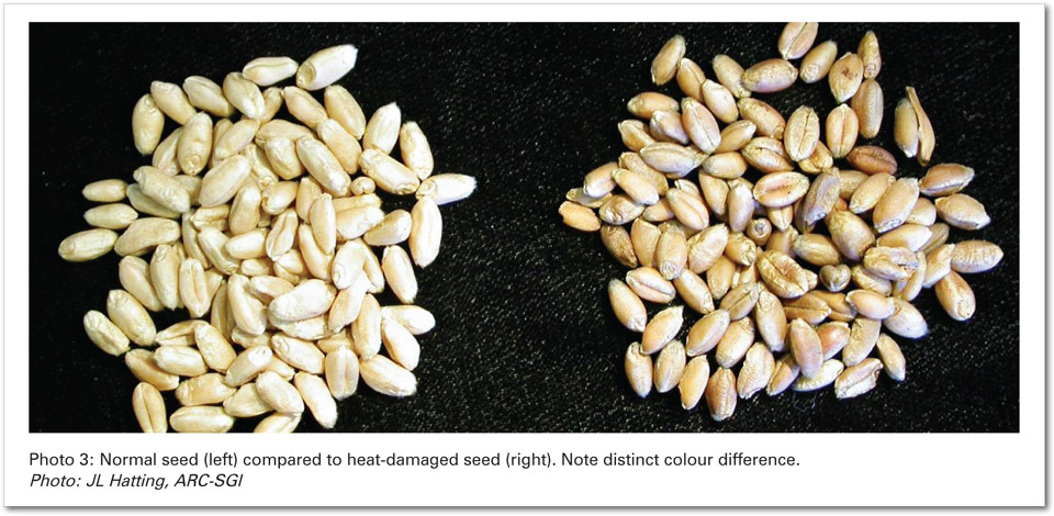 Stunted Growth Or Termination Of The Germination Process In Severe Cases Seed May Occur During Bulk Storage Areas Excessive