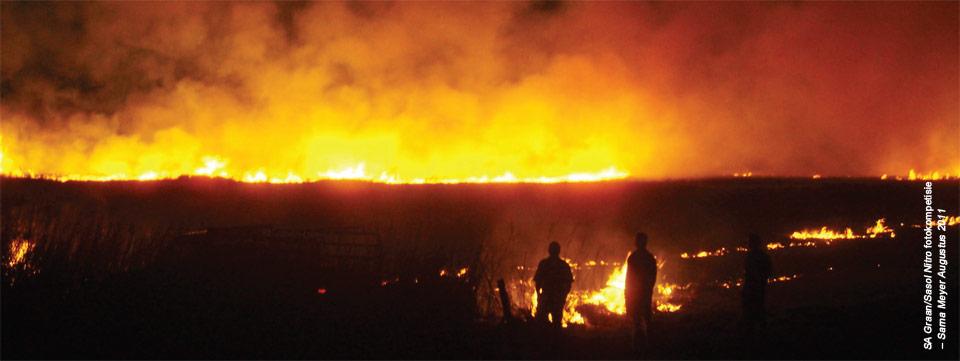 Alles Wat Jy Wou Weet Oor Veld En Bosbrande