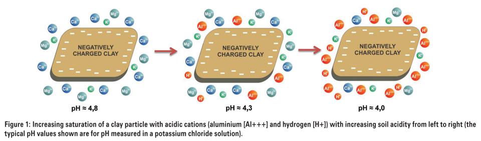 what does calcium propionate mean
