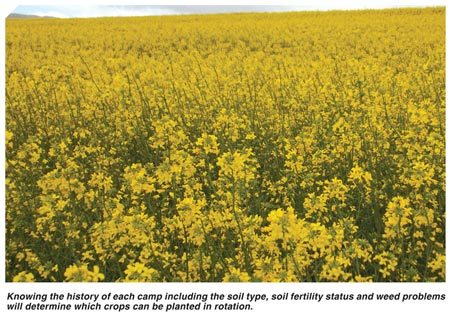 Factors to consider when deciding on canola camps