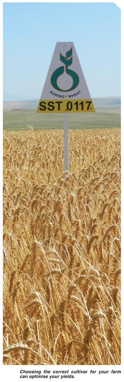 How to choose the 'Mr Right' of wheat cultivars