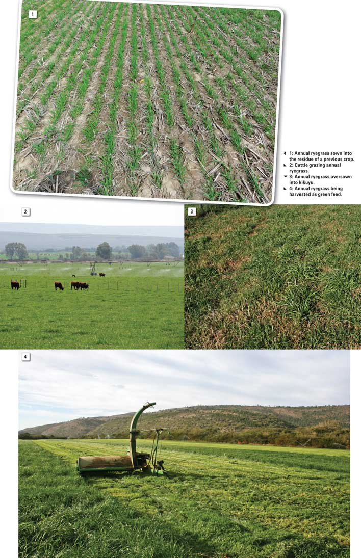 Integrated crop and pasture-based livestock production systems