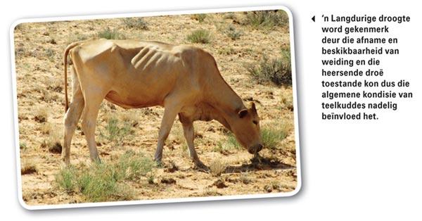 Mycotoxins: A menace to animal health