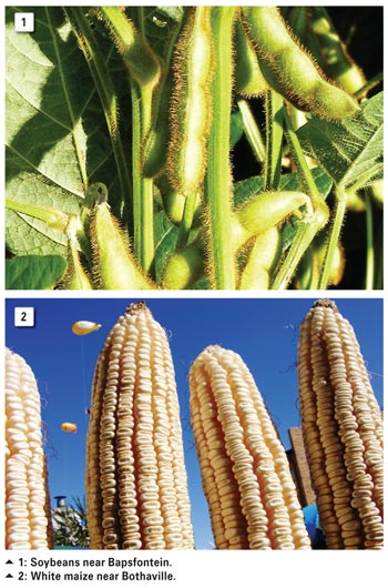 Facts and fiction about GM crop safety