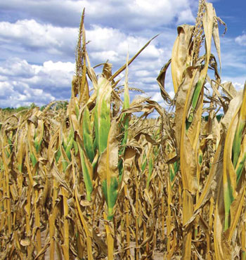 Will Southern Africa cope with the current drought?