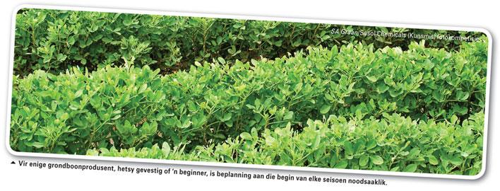 Is jou voorbereiding vir die 2015-grondboonplantseisoen gedoen?