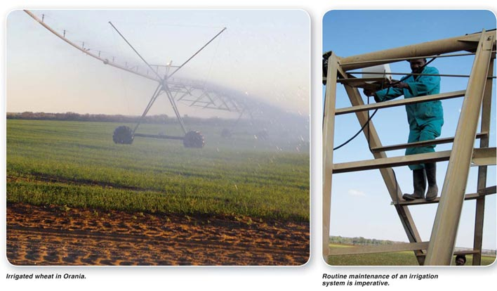 Irrigated wheat production – an intensive system requires intensive management