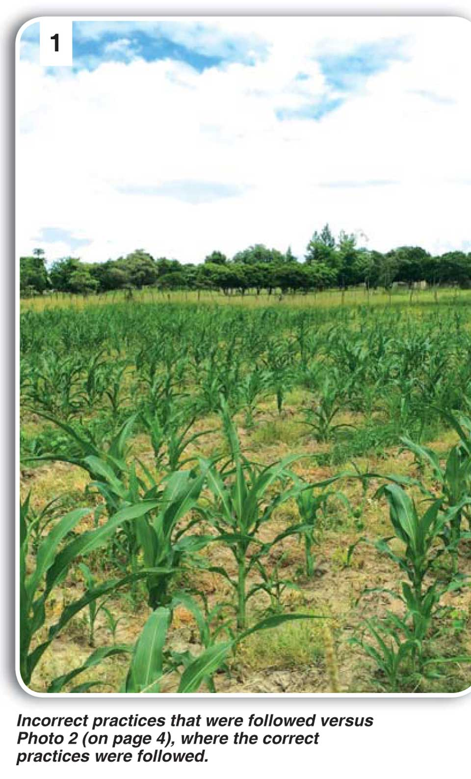 land preparation for maize production