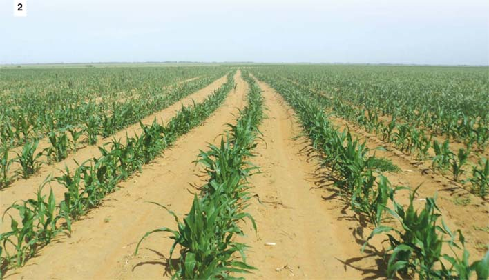 KNOWLEDGE IS POWER! Maize production in uncertain times