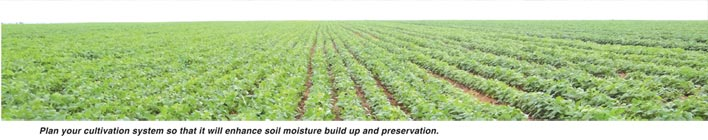 Do your soybeans a favour with moisture conservation