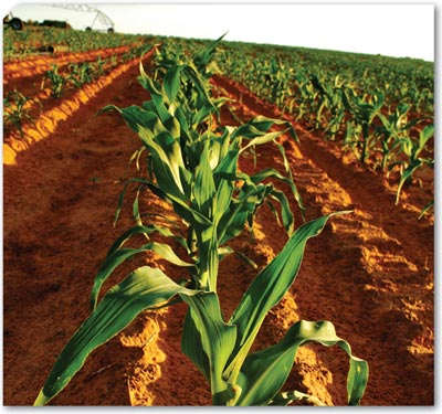 Keep your farm free from alien vegetation