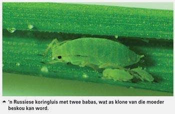 Biologie, babas, biotipes en biobeheer by plantluise