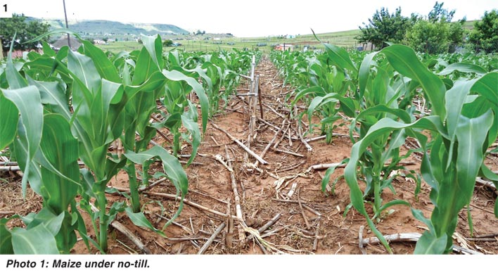 Partnership to promote commercial grain production