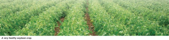 Pest control in soybeans
