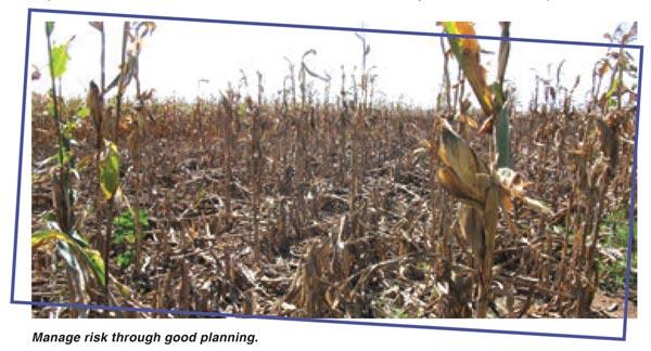 Risk management for your 2016 summer crop planning