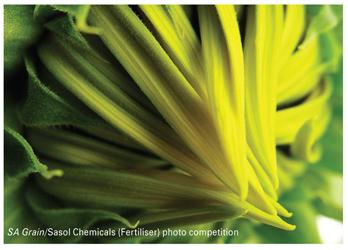Sunflower crop quality