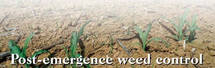 Post-emergence weed control