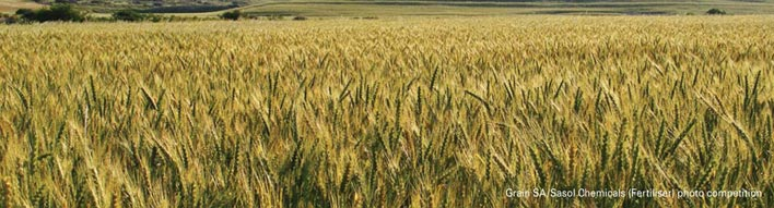 An overview of the local wheat crop quality of the 2014/2015 production season